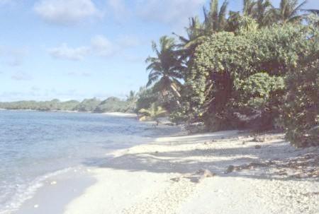 الشاطئ الرملي