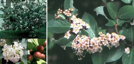 الصور من plantzafrica.com
